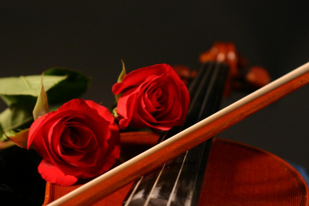 Roses & Violin - Still Life 2 | Ana Liza | Flickr