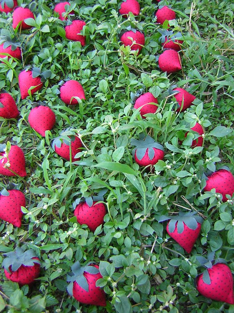 planta u00e7 u00e3o de morangos