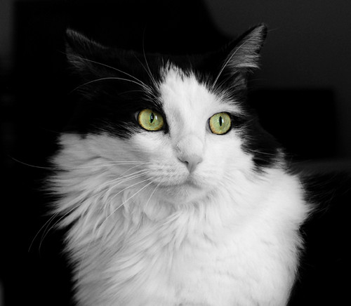 The black white kitty cat by jersey city project