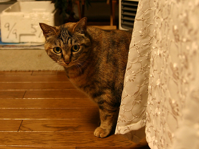 Aunts Cat | My aunts cat peeking around the corner (in ...