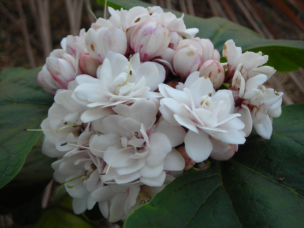 about rose flower essay The flowers of the rose grow in many different colors, from the well-known red  rose  the wild rose species can be grown in gardens, but most garden roses  are.