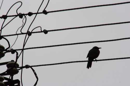 Bird on a Song | by EltonHarding
