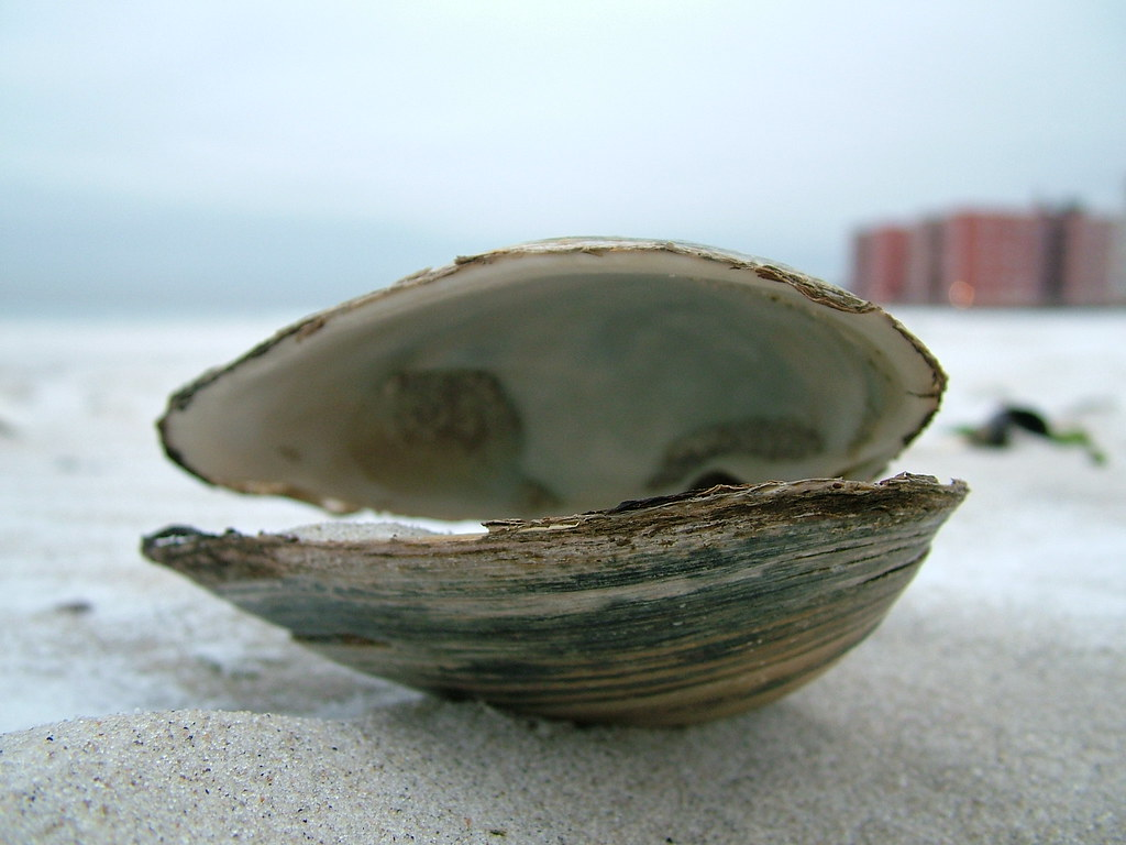 open clam | jose manuel cleofas | Flickr Open Clam