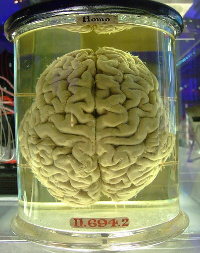 Human Brain | by Gaetan Lee