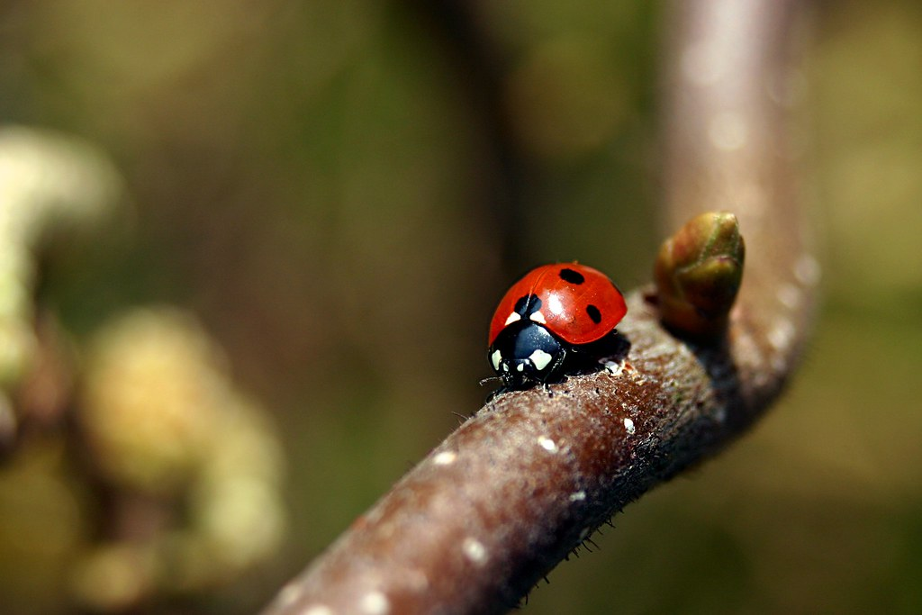 Ladybird | by Jasmic