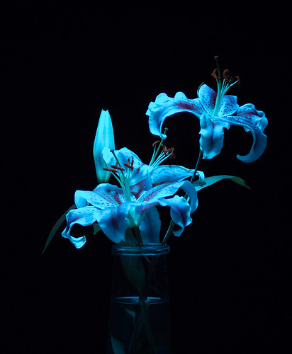 Image result for blue lilies