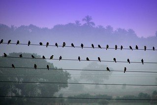 Birds on wires | by K. Shreesh