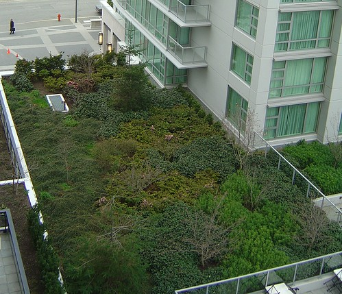 Victoria BC Marriott Green Roof | by pnwra