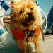 Little boat dog (1994)