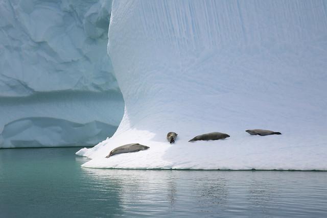 Antarctic 2006