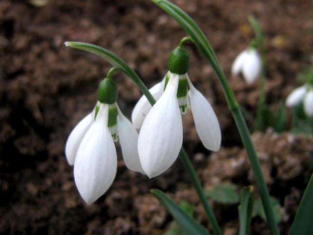 beautiful winter flowers, Beautiful flower