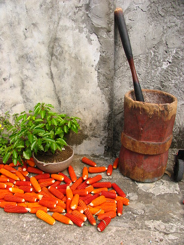 batanes - orange corn | by adlaw