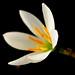 Sentosa 2007 Flickr_24-02-07_21.JPG
