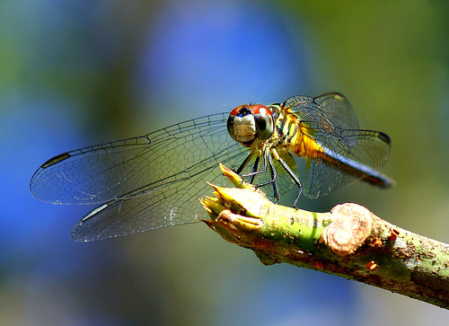 Dragonfly on a Windy Day! | by MrClean1982