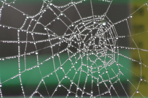 Early morning web | by foxypar4