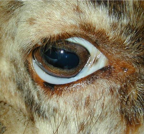 Pole Cat Eyes