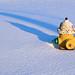 Shadowed Hydrant in Snow