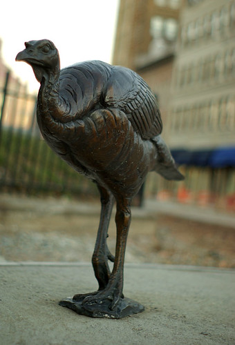 Urban Turkey | by gawagley
