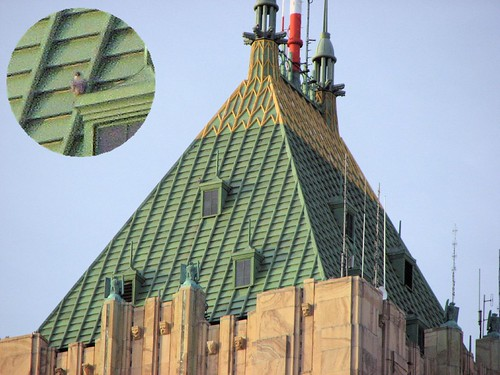 Fisher Building Rooftop Detroit Peregrine Falcon Atop