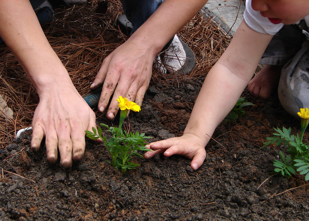 team planting - popofatticus - Flickr