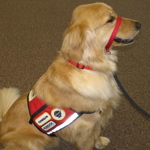 Train Service Dog On Allergen Detection