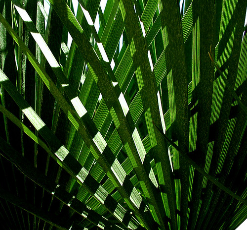 Cross Palm | by cobalt123