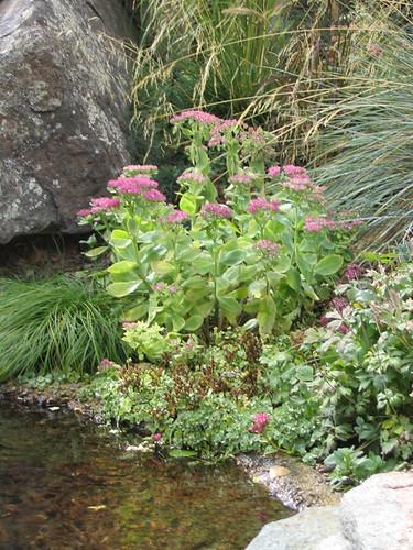 Landscaping Pond Banks : Garden pond bank maureen shaughnessy flickr