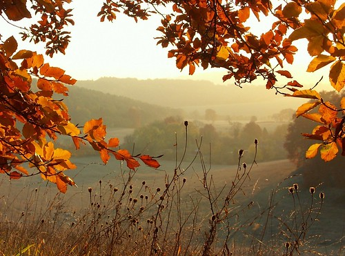 Autumn in the Chilterns | by algo