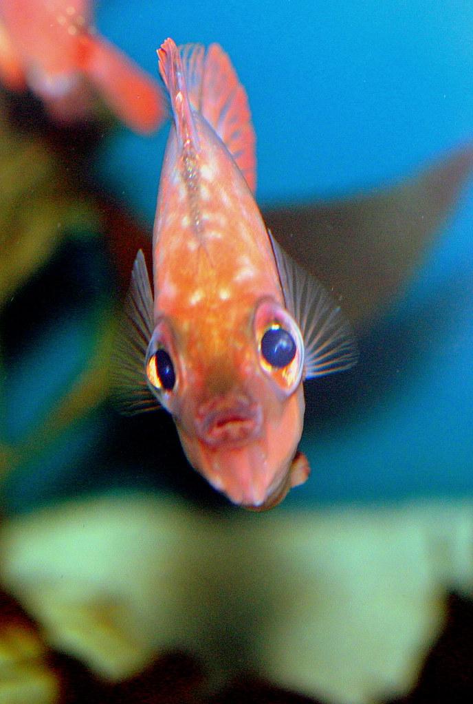 Big eyed fish iregretjumping flickr for One eyed fish