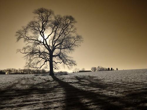 good morning shadows | Inaugural shot with my newly