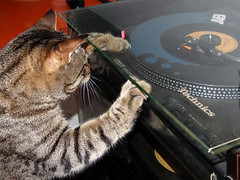 Gatto Mimmo scratching deejay | by Gatto Mimmo