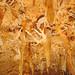 brooks cave, jackson county, florida 4