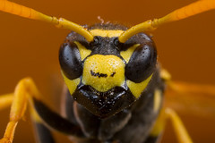 Wasp | by Coder