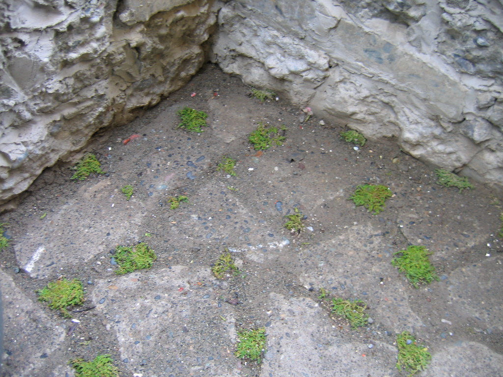 ... GProjects Recycled Concrete Patio | By Lifebegreen