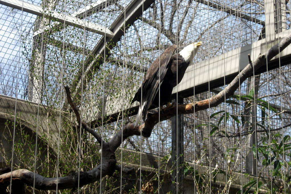 Fort Wayne Children'-s Zoo | Beautiful Birds of Prey