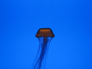 Jelly Fish | by Jennifer Hall