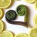 Fiddlehead Fern and Lemon Slices