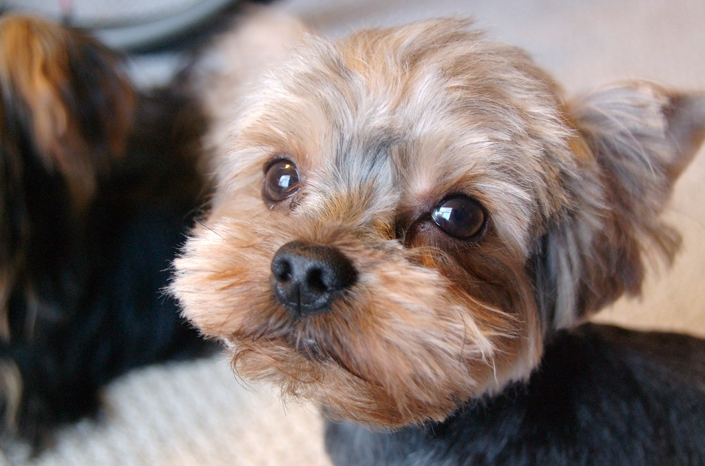Short Hair Dog Breeds Large