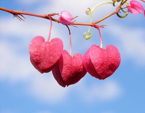 String of hearts | by aussiegall