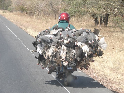 How to transport your chickens properly | by Lennart Woltering
