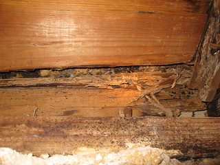 Old termite damage near southwest corner of house | by Patrick Dockens