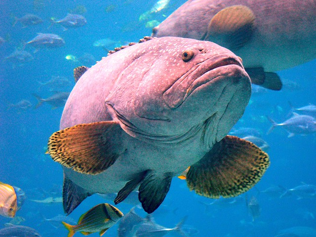 Photo for Ugly fish pictures
