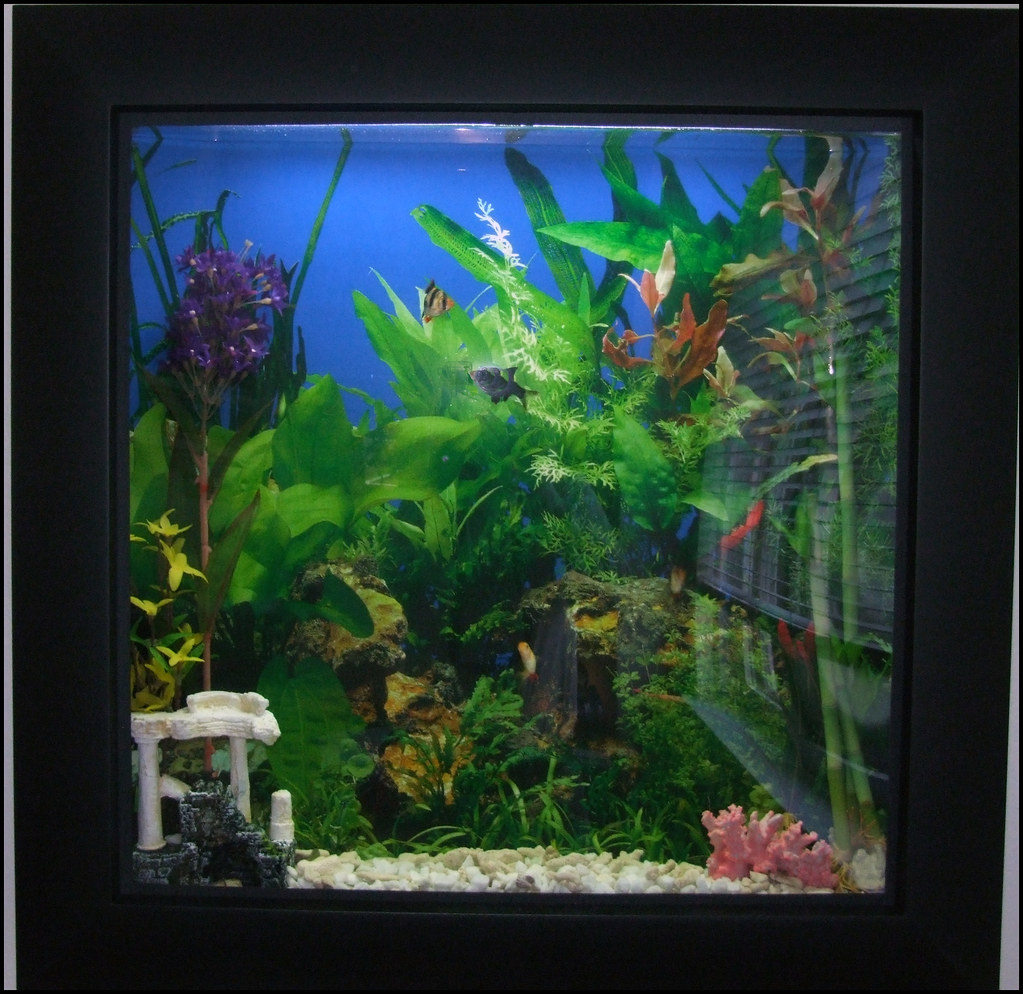 Picture frame fish tank it is only four inches deep and a flickr by jeffrey beall picture frame fish tank by jeffrey beall jeuxipadfo Images