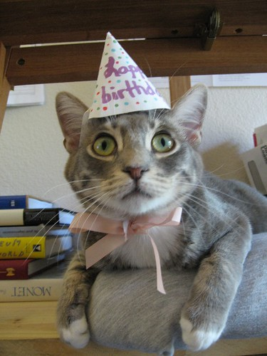 Last Year Birthday Hat