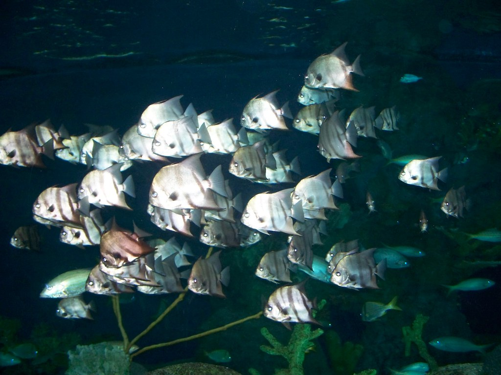 Ripley Aquarium Myrtle Beach South Carolina