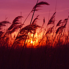 sunset in medford marsh | by paul+photos=moody