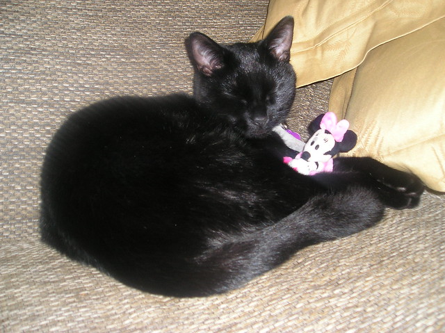 Mini Mouse Cats Name