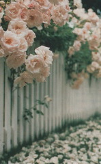 Pretty Picket Fence | by Only a Paper Moon