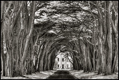 Cypress Tree Tunnel | by geckonia