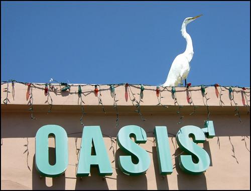 Oasis Cafe Key Biscayne Menu